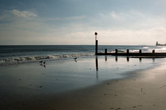 morning (Look at the view) Tags: leica birds reflections groyne bournemouth intothesun 111g