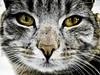 A cat - or - Would you say something? (raphic :)) Tags: pet white black cat golden eyes portret zima kot portrai oczy domowy złote raphic sierść