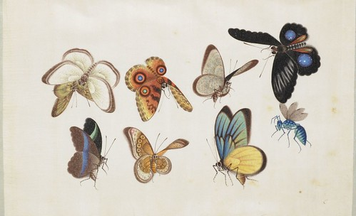 Butterfly Album e