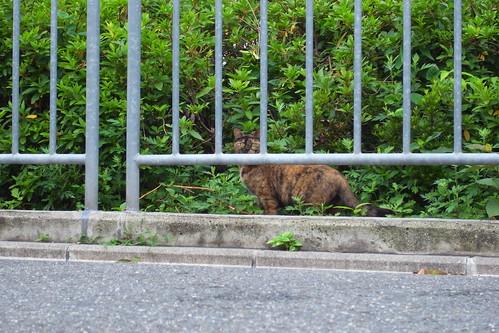Today's Cat@2010-06-15