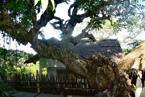 1067 - J15 - Lombok - Village de Rambitan - _IGP2547