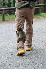 20101000_klagenfurt_121 (_manuelh) Tags: autumn fall monkey austria urlaub krnten carinthia ape monkeys apes 2010 klagenfurt wrthersee