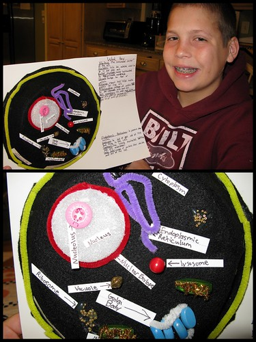 3d animal cell cake. 3D Animal Cell Project by
