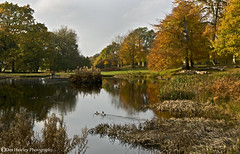 PEACEFUL SCENE. (Des Hawley (over 1.1 million views)) Tags: uk autumn england nature landscape gold nikon cheshire nt dunhammassey peacefulness d300 coth supershot naturesgarden absolutelystunningscapes deshawley thegalaxyhalloffame andromeda10 postie22 thegalaxystars