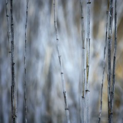 Cold (provincijalka) Tags: blue autumn music cold fall lines vertical standing words waiting group gray freezing falling shore awake straight leaning stacked linear desertrd almostmonochromatic justlikethis onceagain beforedark andhome provincijalka fornovembertobreakme toputmetogether lawunwritten