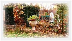 Mein Garten im Herbst (siggi2234) Tags: autumn laub herbst bltter picnik ketsch shwotan siggi2234 november2010 meingartenimherbst