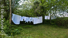 Laundry drying (Elise de Korte) Tags: plant france garden was jardin laundry frankrijk tuin fr lafrance lavelinge bleek ldf wittewas