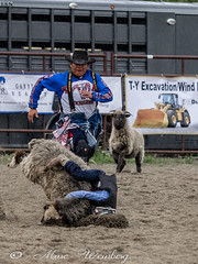 TAKING A HEADER-P6174055.jpg (Marc Weinberg) Tags: cmranch cowboy boy young youngboy rodeo sheep wrangler dubois wyoming header nosedive headinthesand buried weangler horses roughride