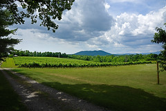 CALS.WesternNC.Surry.6805 (ncsuweb) Tags: surry mountains wine wines westernnc cals clouds green vineyard