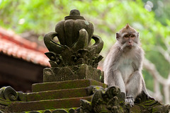 Sacred Monkey Forest, Ubud, Bali (EdBob) Tags: bali balinese monkey balineselongtailedmonkey temple ubud park indonesia crabeatingmacaque longtailedmacaque macaque primate southeastasia southeastasiatravel cynomolgusmonkey macaca mfascicularis asia asian asiatravel stone hindu religion hinduism animal one face fur portrait edmundlowephotography edmundlowe tourism destination