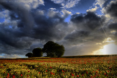 Denmark (Neal J.Wilson) Tags: weather clouds stormclouds sky skies trees poppies poppy wheat dramatic landscapes moods jutland jylland denmark danish nordic scandinavia fields farming agriculture sunset dusk sunrays sunlight sunbeams