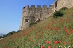 Torres Vedras (Helderlopesfotos) Tags: castelo torresvedras portugal natureza património platinumheartaward landscape flower flowers nature park light red green blue sky city