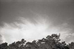 (tmkbnn) Tags: prakticabx20 slr singlelensreflex smallformat 35mm 135 film filmphotography kodak400tx bw blackandwhite trees treetop sky clouds tomek tmkbnn