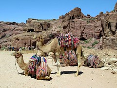 Tourist Camels (D-Stanley) Tags: camels siq petra jordan tourists