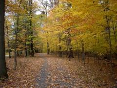 nature walk's