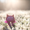 Ice Cold IceBat (6/30) (Morphicx) Tags: sun sunlight blur cold green beautiful grass actionfigure 50mm frost dof purple action bokeh dream vinyl ugly uglydoll 50 deventer uglydolls icebat 30days 5014 ilovebokeh bokehwhores bokehwhore uglydollsunite uglydollunite