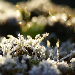 Dutch winter bokeh...... (atsjebosma) Tags: winter light sunlight snow macro nature dutch wednesday bevroren bokeh nederland thenetherlands groningen cristal koud ijskristallen colddays frozenice hbw anawesomeshot icecristal winterbokeh infinestyle december2009 atsjebosma