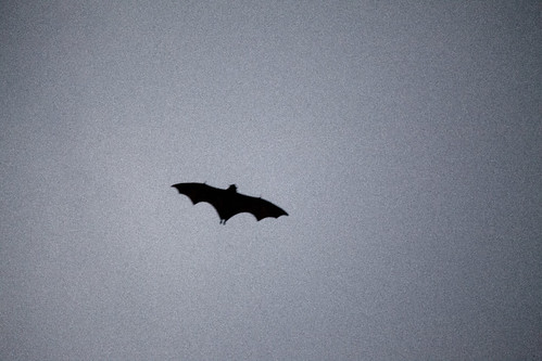 Bats over the Domain
