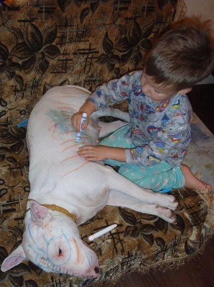 Anak kecil vs Anjing Galak