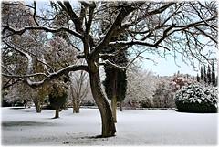 giardino d'inverno a Monteriggioni Siena (Massimo Luca Carradori) Tags: winter italy snow italia tuscany siena toscana monteriggioni distillery abigfave