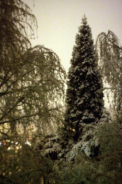 snow, december '09