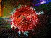 Champagne Supernova - Wisconsin, Dousman - Winter 2010 P1010451-2 (Ilcaripawi) Tags: lumix nikon vivid panasonic speedlight 2009 soe sb25 golddragon dmclx3 spiritofphotography dmwlw46 artofimages dmwla4