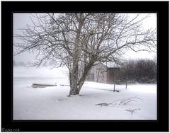 Dock, Tree, and Shed (^~^Pointyears) Tags: snow md aperture raw snowstorm olympus windswept garrettcounty deepcreeklake brrrrrrr e520 3shothdr