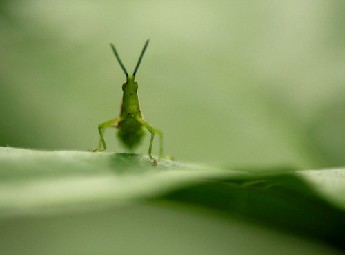 Attitude of a Grass Hopper !