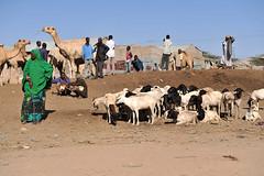 MIT_0054-Edit (Mitya Aleshkovsky) Tags: travel somalia somaliland