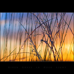 River Grass in Dusk Light (Tony Murphy) Tags: 50mmf14