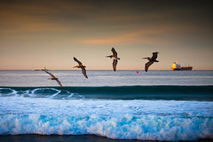 Four Birds, an Oil Tanker, and the First Light of 2010 (Hal Bergman Photography) Tags: ocean california ca morning beach birds losangeles surf waves formation pacificocean dockweiler