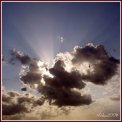La desolacin est en Hait (y hoy,un ao despus,sigue igual) (nuska2008) Tags: naturaleza clouds nubes gaviota hait nubarrones rayosdelsol topseven thesuperbmasterpiece saariysqualitypictures nuska2008 theoriginalgoldseal nanebotas