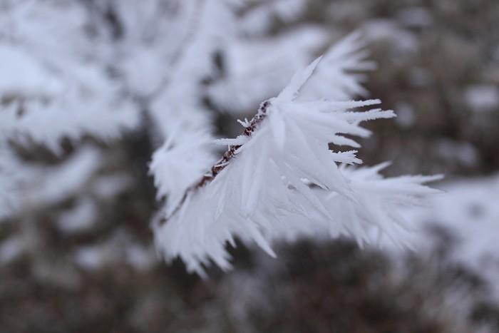 01-18-frozen8