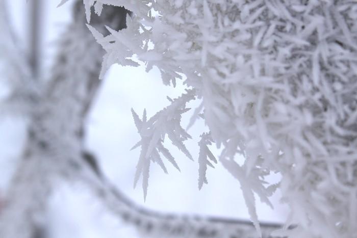 01-18-frozen1