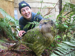 Sirocco and Karin (Department of Conservation) Tags: newzealand birds conservation parrot doc sirocco departmentofconservation kakapo