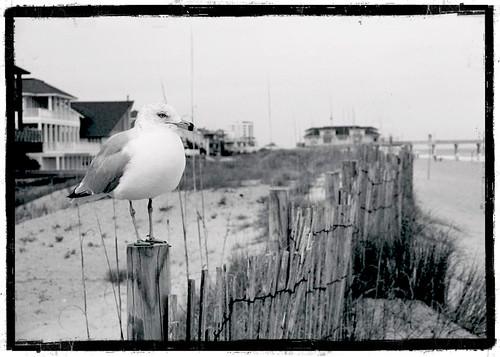 Postcard- B&W Bird