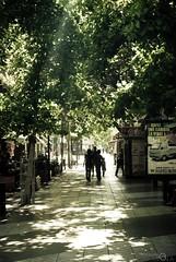 A Calm Walk Under the Trees. - 26/365 (Malinkrop) Tags: chile trees urban 50mm reflex nikon arboles dof bokeh walk urbano f18 dslr caminata deepoffield chw 50mmf18 profundidaddecampo 50mmf18af d80 nikond80