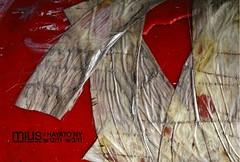 "2006 Solo exhibiton ""mius x HAYATO NY"" DM"