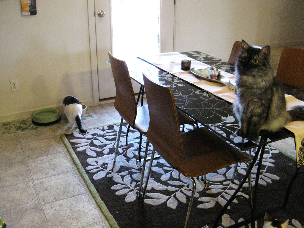 The Dining Table & Cat Feeding Station
