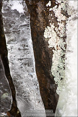 Moss, Lichen and Ice (#111)