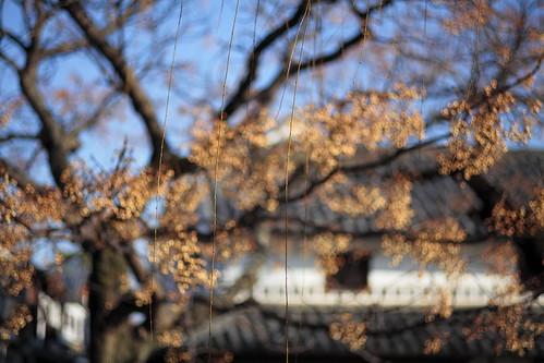Kurashiki Bikan historical quarter #4