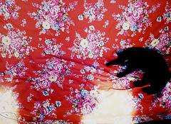 設計走廊過新年 作者 飛魚婚紗李凱莉