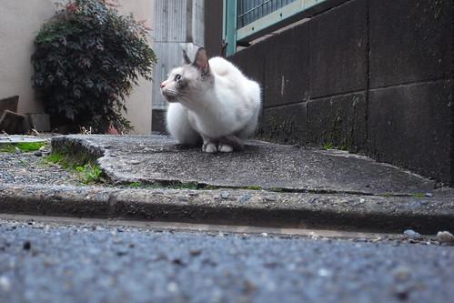 Today's Cat@2010-02-13