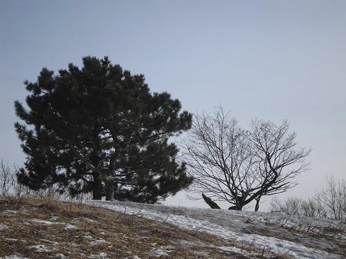 Ancienne piste de ski de l'U de M