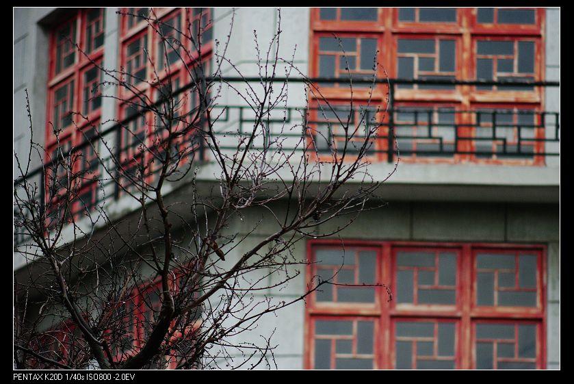 2010/02/18 CZJ 100-500mm 植物園亂試(C/Y改M42)!