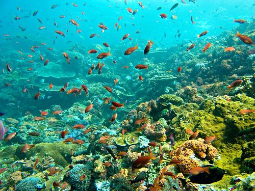 Flores Underwater 15