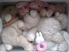 Teddies in the tub