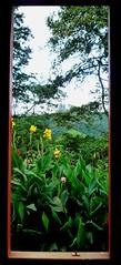 Asia 065 (Neil Hannam) Tags: malaysia cameronhighlands teaplantation