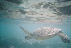 0000002-R1-022-9A_011 (Moustachios) Tags: hawaii snorkeling hanaumabay