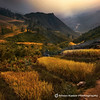 Golden Rice Terraces (fesign) Tags: storm clouds vietnam ricefield sapa riceterraces terracedfields hoanglienson laocaiprovince hoangliennaturereserve magicunicornverybest sbfmasterpiece sbfgrandmaster
